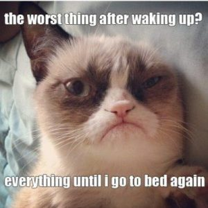 Grumpy cat speaks the truth