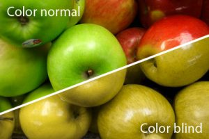 What those with a red-green color deficiency see