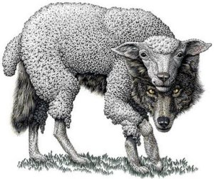 drawing of wolf in sheepskin