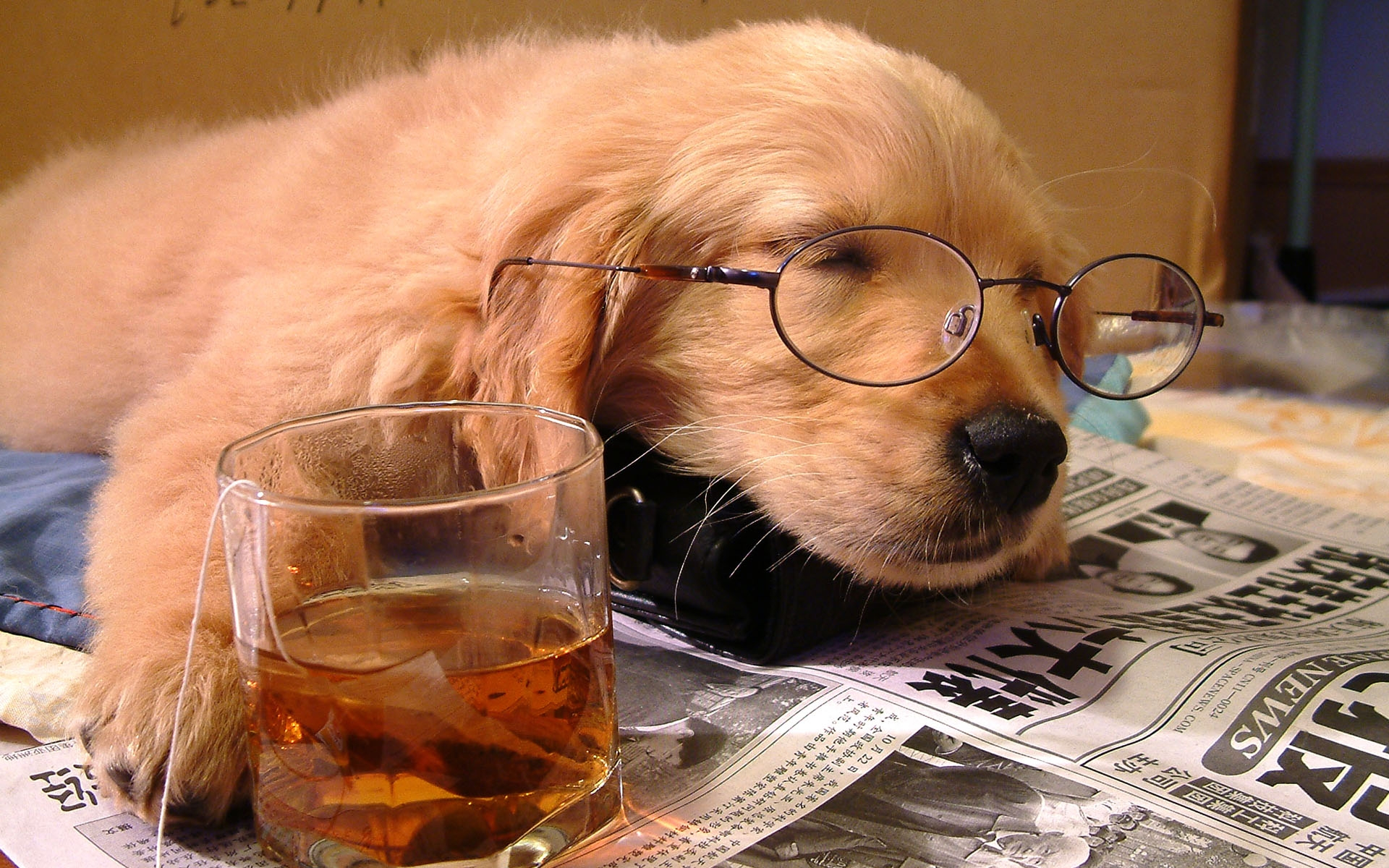 photo of dog wearing glasses reading the paper