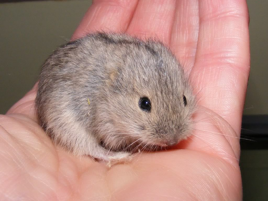 photograph of lemming in a person's hand