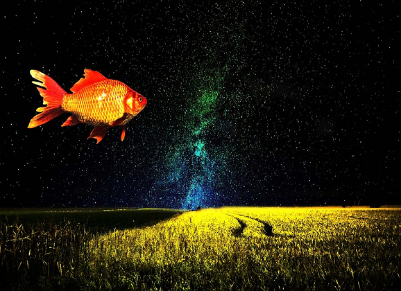 Nighttime Hallucinations