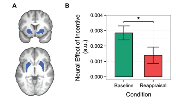 in the brain diagram, the blue areas are the ventral striatum  in the bar  graph, you can see that when people thought of the rewards in terms of a  loss