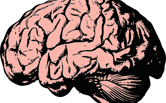 Neuromyth Busters